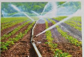 """Alpana Pant Sharma on Twitter: """"Webinar on Enhancing Water Use Efficiency  and Coverage of Micro Irrigation in Indian Agriculture held . Government  has set a target of covering 100 lakh ha in"""