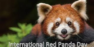 International Red Panda Day - September 19, 2020 | Happy Days 365