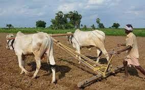 AP to set up crop insurance firm - The Hindu BusinessLine